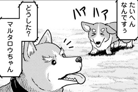72.犯人は誰!? ドッグラン4月バカ事件簿!!