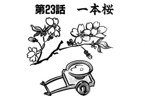 51.一本桜